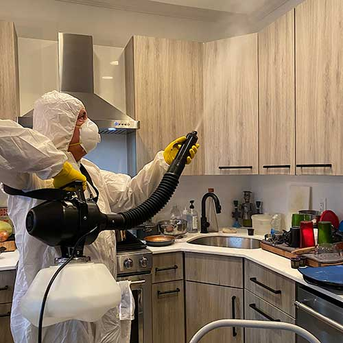 Disinfecting Kitchen